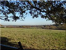 TQ4476 : Looking across Woodlands Farm by Marathon