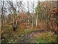 SE3904 : Path into the woods, off Bradberry Balk Lane by Christine Johnstone