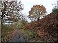 SE3804 : Trans Pennine Trail, below Simons Way, Wombwell by Christine Johnstone