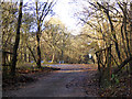 SP6531 : West Wood - paintball terrain by Robin Webster