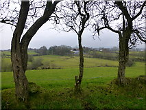 H5371 : Gnarled trees, Bancran by Kenneth  Allen
