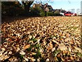 SO8742 : Autumn leaf fall  by Philip Halling
