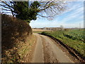 TG0723 : Old Lane, Kerdiston by Adrian Cable