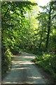 SW8842 : Lane in Lamorran Wood by Derek Harper