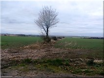 SE5214 : Fields Viewed from White Leys Road by Jonathan Clitheroe