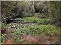 TQ8323 : Pond in Brickwall Park by Patrick Roper