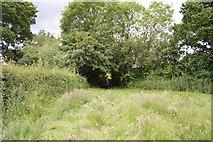 TQ5247 : Footpath through hedge by N Chadwick