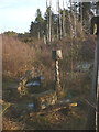 SD3492 : 'Habitat', a sculpture at Grizedale Forest by Karl and Ali