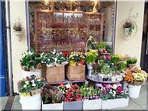 SO6024 : Florist's shop window by Jonathan Billinger