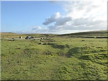 SD8965 : Moorland and car park south of Malham Tarn by David Smith