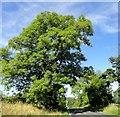 NZ0657 : Ash tree on the B6309 by Robert Graham