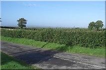S7297 : Rural Kildare by Alex Passmore
