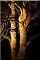 SX9050 : Tulip tree, Coleton Fishacre by Derek Harper