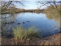 TQ5383 : Lake in Hornchurch Country Park by Marathon