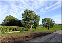 SJ6641 : Farmland south of Audlem in Cheshire by Roger  Kidd