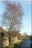 ST8180 : Littleton Drew Road, Acton Turville by Derek Harper