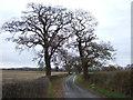 SJ4964 : Road (footpath) to Brookhouse Farm by JThomas
