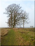 SO8844 : Bare trees in Croome Park by Philip Halling