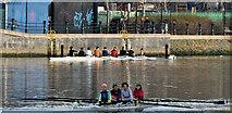 J3473 : Rowers, River Lagan, Belfast (December 2016) by Albert Bridge