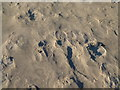 NU2328 : Patterns in the sand, Beadnell Bay by Alan Murray-Rust