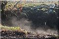 TQ2997 : Steaming Ditch,Trent Park by Christine Matthews
