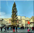 TQ3080 : Trafalgar Square, Christmas Tree by PAUL FARMER