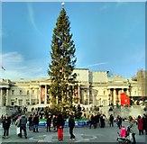TQ3080 : Trafalgar Square, Christmas Tree by PAUL FARMER