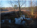 SJ5570 : Frozen marsh at Delamere Forest by Stephen Craven