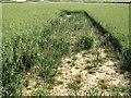TQ5027 : Skylark plot nesting area, Sweethawes Farm by Patrick Roper