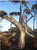 NT6378 : East Lothian Landscape : Yee-Ha! by Richard West