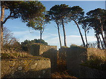 NT6378 : East Lothian Landscape : Blocks And Pines Near Hedderwick Hill by Richard West