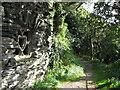 SS6949 : Jenny's Cove grotto 4 - Lee Abbey, North Devon by Martin Richard Phelan