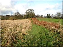 TG3203 : Dead bracken on a field boundary by Evelyn Simak