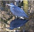 SE6250 : Heron below the weir by DS Pugh