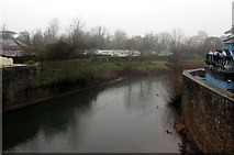 SO5012 : Ducks on the River Monnow, Monmouth by Jaggery