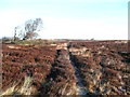NZ9204 : Path on moorland near to the road junction, Fylingdales by Humphrey Bolton