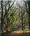 ST1738 : Track and bank, Rectory Wood by Derek Harper