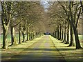 SO8642 : Tree-line drive, Earl's Croome Court by Philip Halling