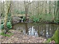 SE3214 : Lower feeder pond for swimming pool in Seckar Wood by Christine Johnstone
