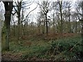 SE4208 : Woodland on the western edge of Houghton Common by Christine Johnstone