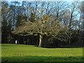 SD7313 : Bromley Cross by Carroll Pierce