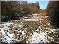"TQ8020 : ""Romney Marsh"" in Brede High Woods by Patrick Roper"