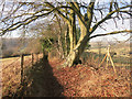 SU7889 : Path near Hatchet Wood by Des Blenkinsopp