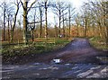 SO8060 : Entrance to Monkwood Nature Reserve, near Monkwood Green, Worcs by P L Chadwick