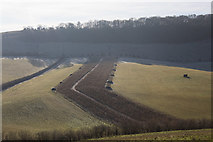 SU6022 : Odd shaped planting on Wheely Down Farm by Peter Facey