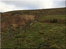 SS8890 : Boundary Fence by Alan Hughes