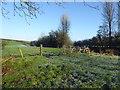 H4869 : Frosty field, Aghagallon by Kenneth  Allen