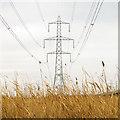 TQ5479 : Pylons at Aveley Marshes, RSPB Rainham by Roger Jones