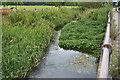 SU8792 : River Wye by N Chadwick