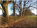TQ4260 : Field near Down House by Marathon